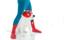 SUPER HERO DOG AND ITS LITTLE ...