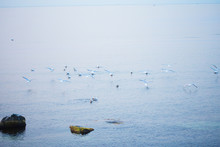 A Flock Of Gulls Takes Off Fro...