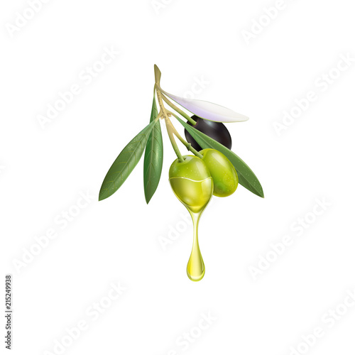 Photo Realistic olive branch 3d illustration for advertising posters, postcards, label