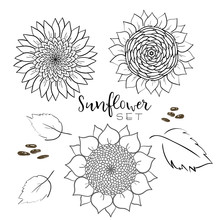 Sunflower Seed And Flower Line Vector Drawing Set. Hand Drawn Isolated Illustration. Food Ingredient Vintage Sketch. Great For Oil Packaging Design, Label, Banner, Poster, Print Design, Wedding Card.