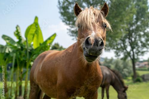 Fotografie, Obraz  the horse