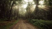 Road In Enchanted Forest