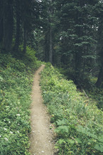 Hiking Trail Through Autumn Forest, North Cascades, Washington