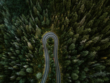 Switchback Through Evergreens