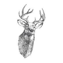 Vector Vintage Deer Head In En...