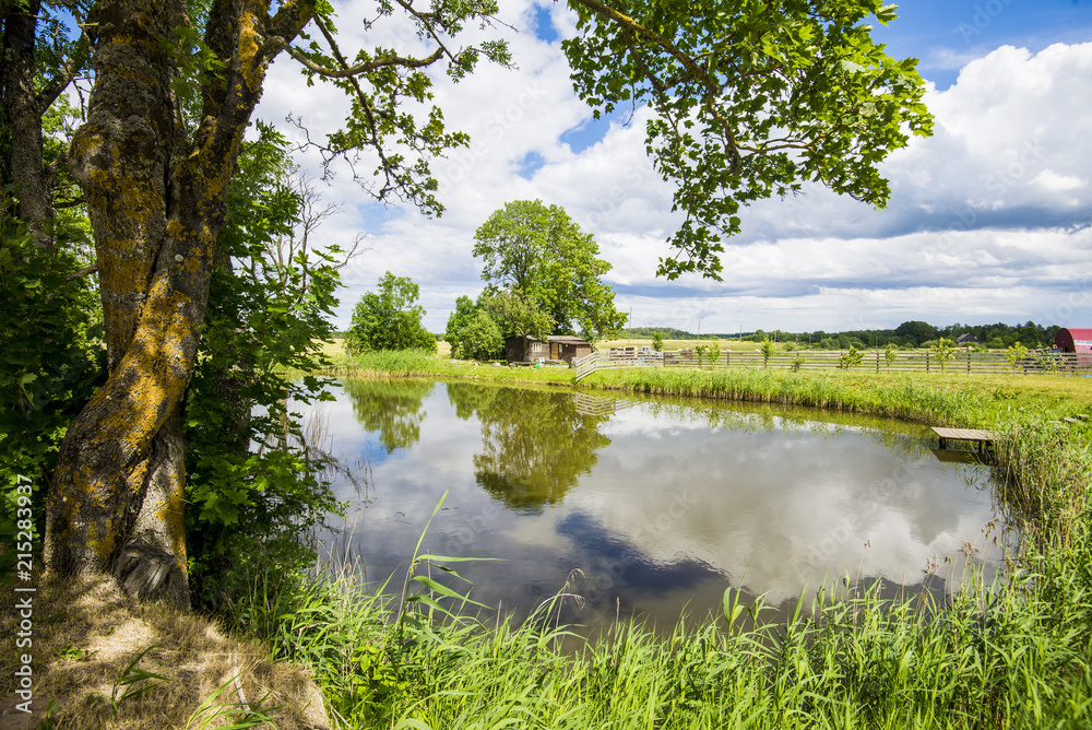 Fototapety, obrazy: View of the small pond of a country farm on a clear summer day, Latvia