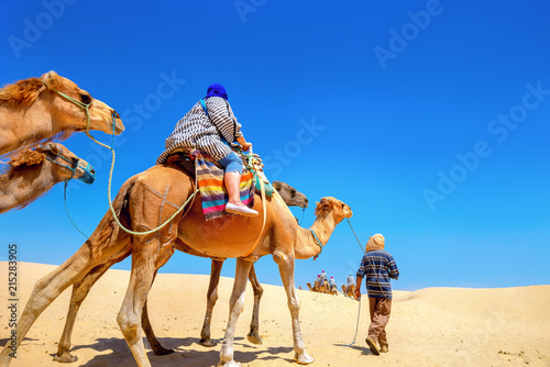 Poster Tunesië Safari tourism on camels. Sahara desert, Tunisia, North Africa