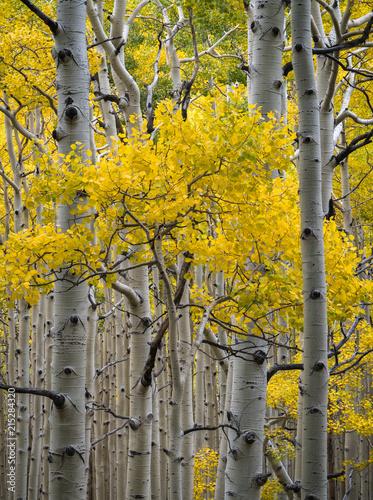 Fall Foliage Fotobehang