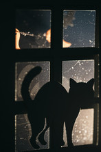 Cat By The Window In A Spooky Scene