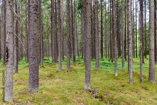 las-iglasty-o-wydzwieku-rustykalnej-przestrzeni