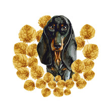 A Dog Of The Dachshund Breed In A Wreath Of Yellow Leaves. Puppy Watercolor Is Isolated On White Background.