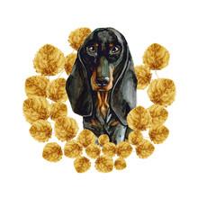 A Dog Of The Dachshund Breed I...