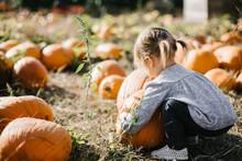 Toddler Choosing Large Pumpkin