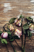 Wilted Dry Roses On A Wooden Background