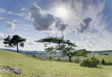 Landscape With Scots Pine (Pin...