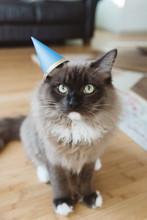 Party Animal Cat