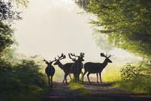 Herd Of Male Fallow Deer On Misty Road