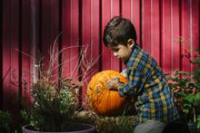 Little Kid With Pumpkin