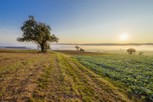 Countryside With Morning Mist Over Fields With Apple Trees At Sunrise In Grossheubach In Bavaria, Germany