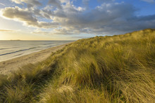 Dune Grass On Sand Dunes On The Beach At Sunrise Along The North Sea At Bamburgh In Northumberland, England, United Kingdom