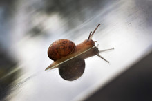 Garden Snail On Greenhouse Roof