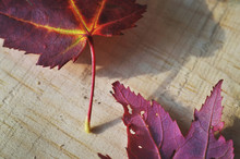 Close Up Of Autumn Leaves On Wooden Background