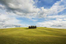 Small Grove Of Cypress Trees On An Open Field In San Quirico D'Orcia In Val D'Orcia In Tuscany, Italy