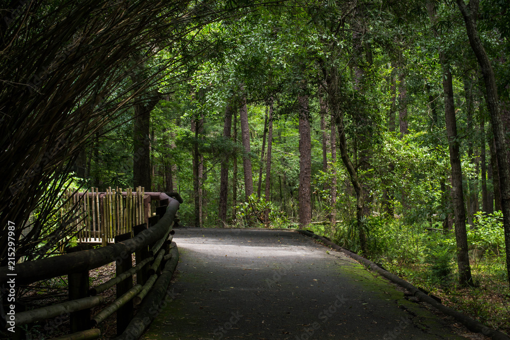 Fototapeta Canopied path at zoo