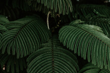 Palm Fronds Packed Together
