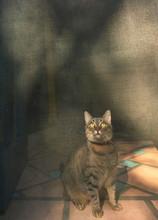Tabby Cat Sitting In Front Of The Screen Door - Eyes Wide