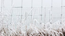 Hoarfrost On Fence And Grasses.