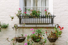Window Box And Hanging Baskets Containing Straggly Pelargoniums