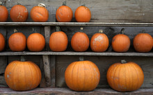 Mix Of Pumpkins For Sale At A ...