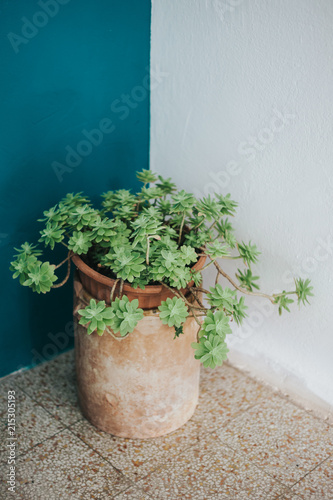 Spoed Foto op Canvas Planten Succulent plant on a blue furniture