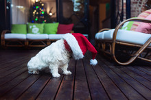 Dog In A Santa Hat At Christmas