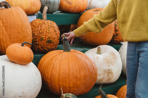 A young woman picking pumpkins at a pumpkin patch