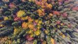 Kolorowy las przy spadkiem - 215308736