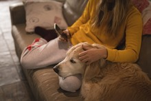 Girl With Dog Using Mobile Phone In Living Room