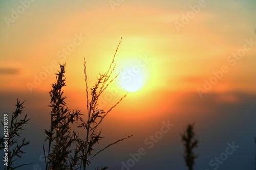 pole-trawa-z-zachodem-slonca-pomaranczowe-i-blekitne-niebo