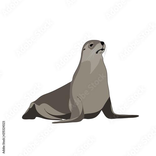 Leinwand Poster seal animal. vector image