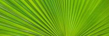 Green Footstool Palm Leaf Thro...