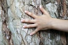 Child Palm And Tree Bark