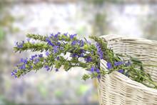 Basket Of Hyssopus Officinalis...