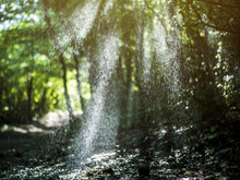 Shadows In The Summer Forest And Rain Pour Between The Trees On A Sunrays During Sunny Day