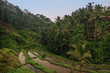 Rice terraces in Tegallalang, Ubud, Bali, Indonesia Crop, Farm, Field