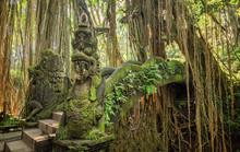 Sacred Monkey Forest Sanctuary...