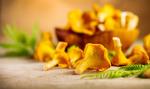 Raw Wild Chanterelle Mushrooms...