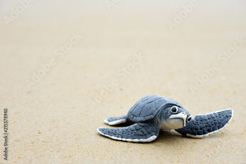 Poster Tortue Little turtle on the beach,Copy space.