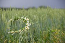 Closeup On Daisies Wreath Lyin...