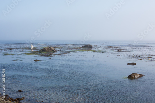 Foto op Canvas Kust Natural landscape. Foggy day at the seaside. Coastal rocks and cloudy sky on the seashore